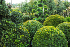 Plantencentrum Asselberghs