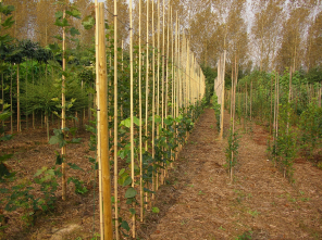 Opkweek bomen